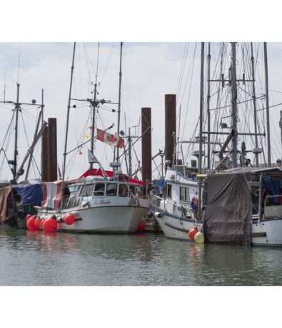 Vancouver Sun: B.C. commercial fishery among sectors fearing COVID-19 market fallout